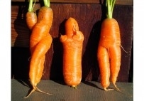 Click to enlarge image 017_carrots3onWoodEDf__1412351719_117.196.53.255x.jpg
